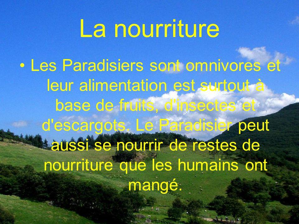 Lhabitat Le Paradisier royal habite principalement en Nouvelle- Guinée. Il habite dans les forêts et plus souvent près des banlieus. Il est présent su