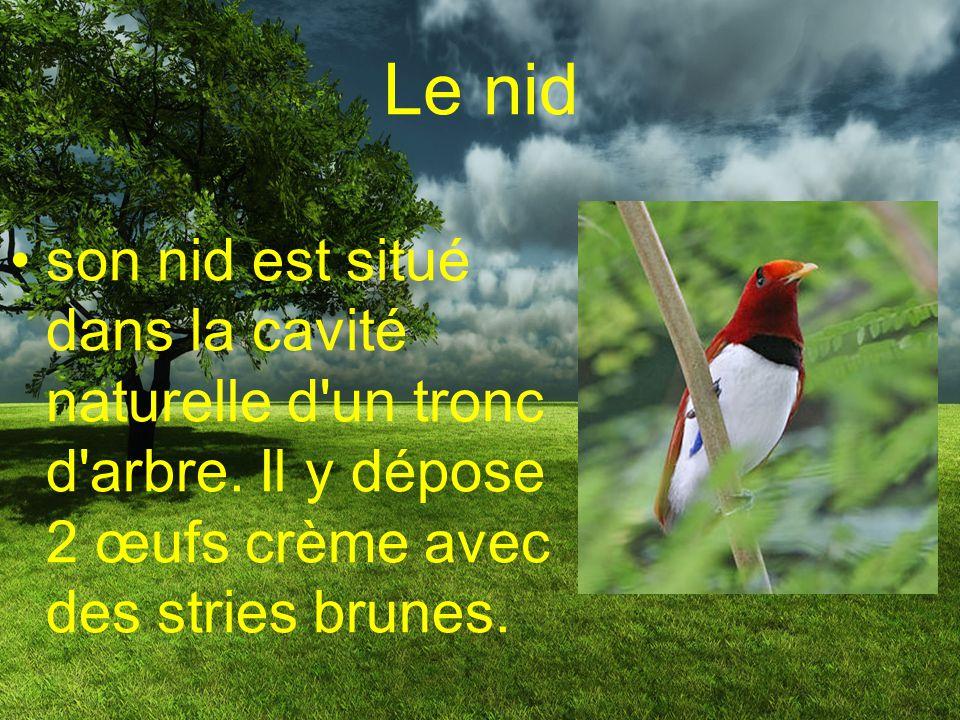La reproduction Lorsque vient le temps de s`accoupler, le paradisier fais une parade dans les arbres pour séduire la femelle. http://www.youtube.com/w