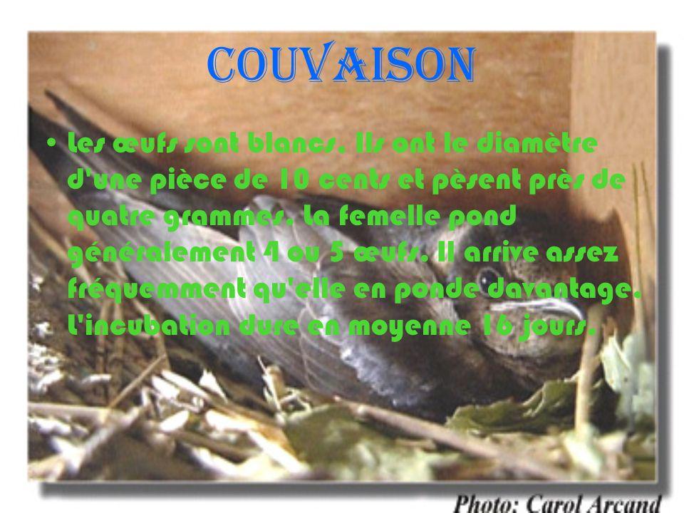 Éclosion À sa naissance, ce petit être nu et fragile ne pèse que 2.75 grammes.