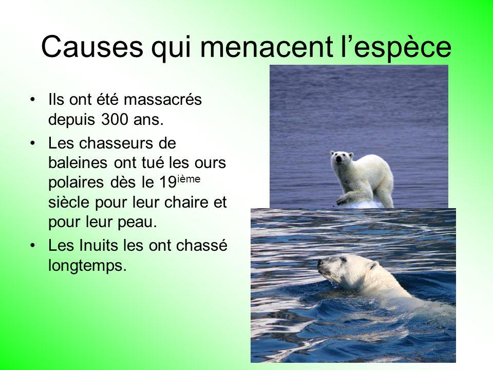 Causes qui menacent lespèce Ils ont été massacrés depuis 300 ans. Les chasseurs de baleines ont tué les ours polaires dès le 19 ième siècle pour leur