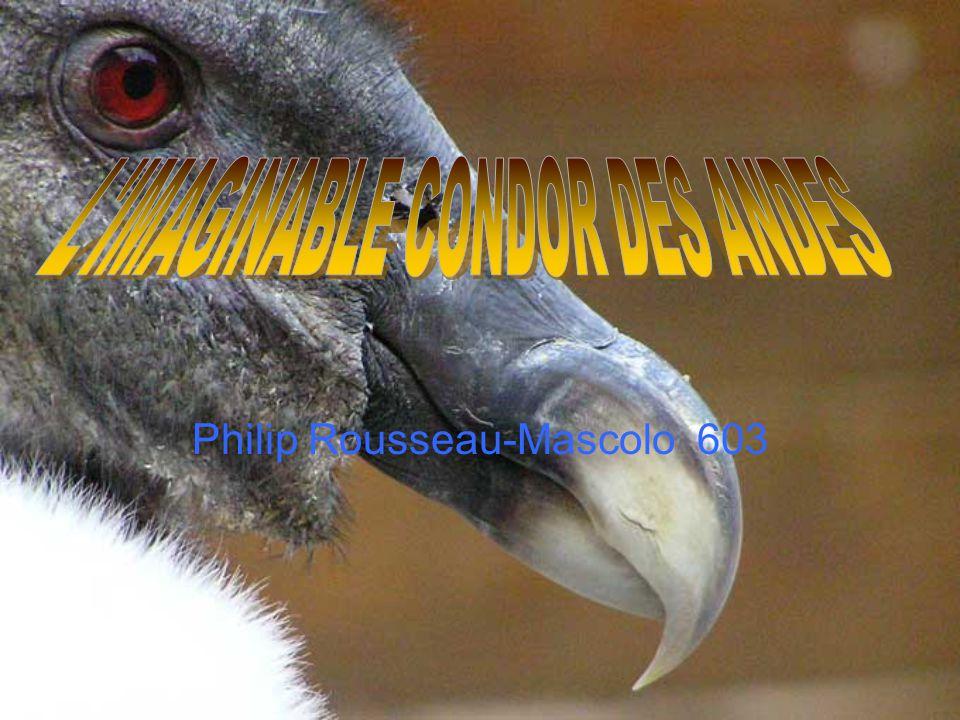 Philip Rousseau-Mascolo 603