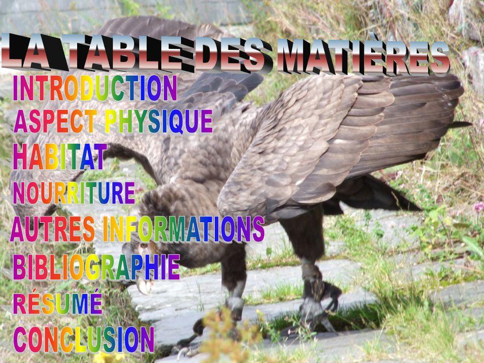 Bonjour, aujourdhui je vais vous parler du grand condor des Andes.