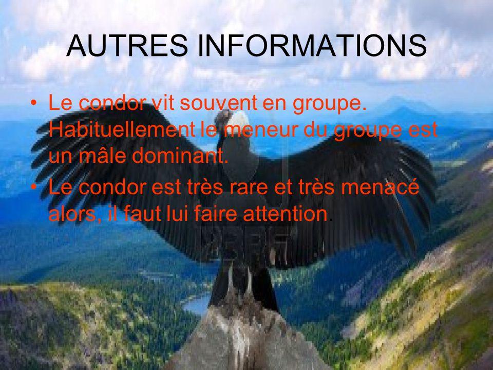 AUTRES INFORMATIONS Le condor vit souvent en groupe. Habituellement le meneur du groupe est un mâle dominant. Le condor est très rare et très menacé a