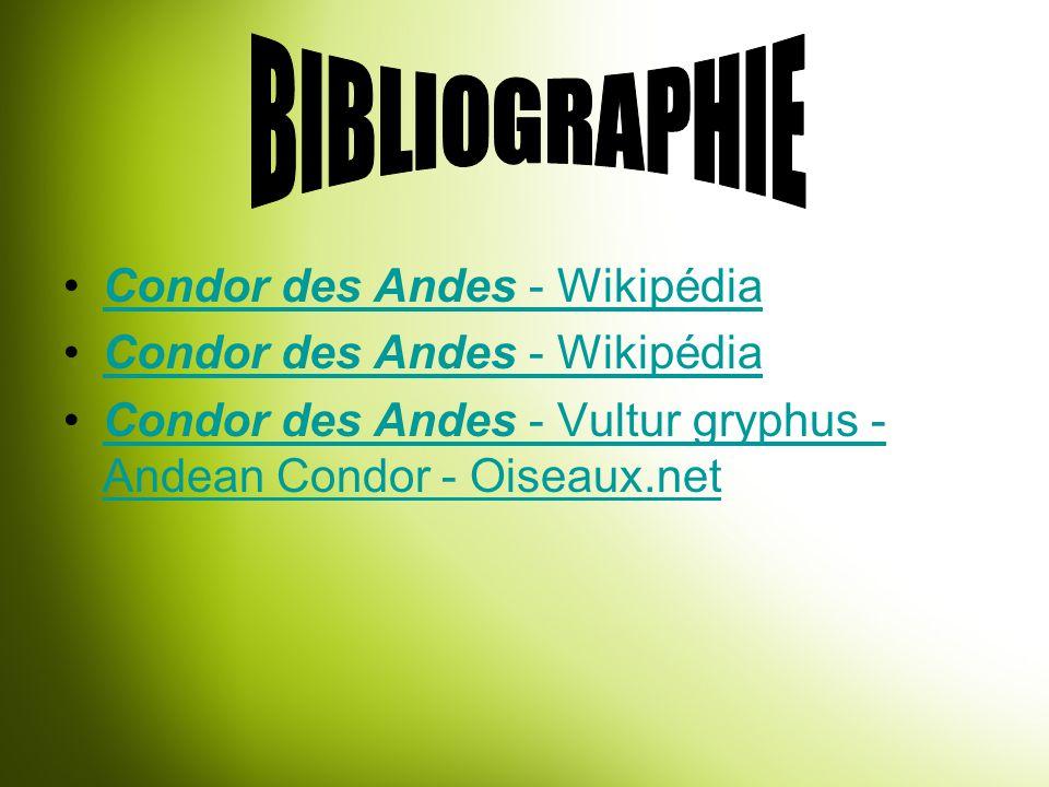 Condor des Andes - WikipédiaCondor des Andes - Wikipédia Condor des Andes - WikipédiaCondor des Andes - Wikipédia Condor des Andes - Vultur gryphus -