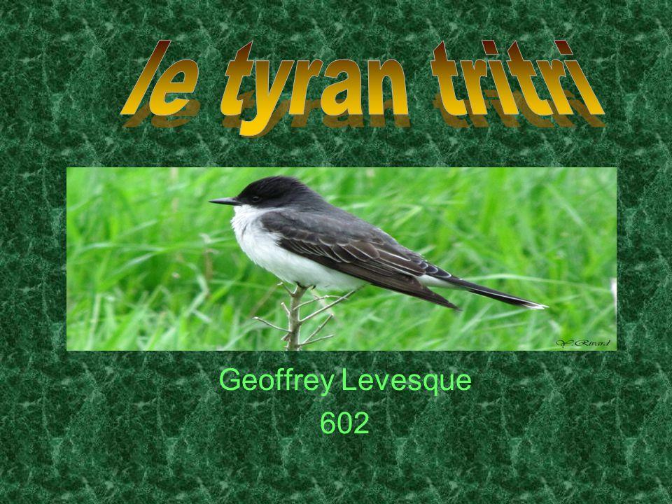 Geoffrey Levesque 602