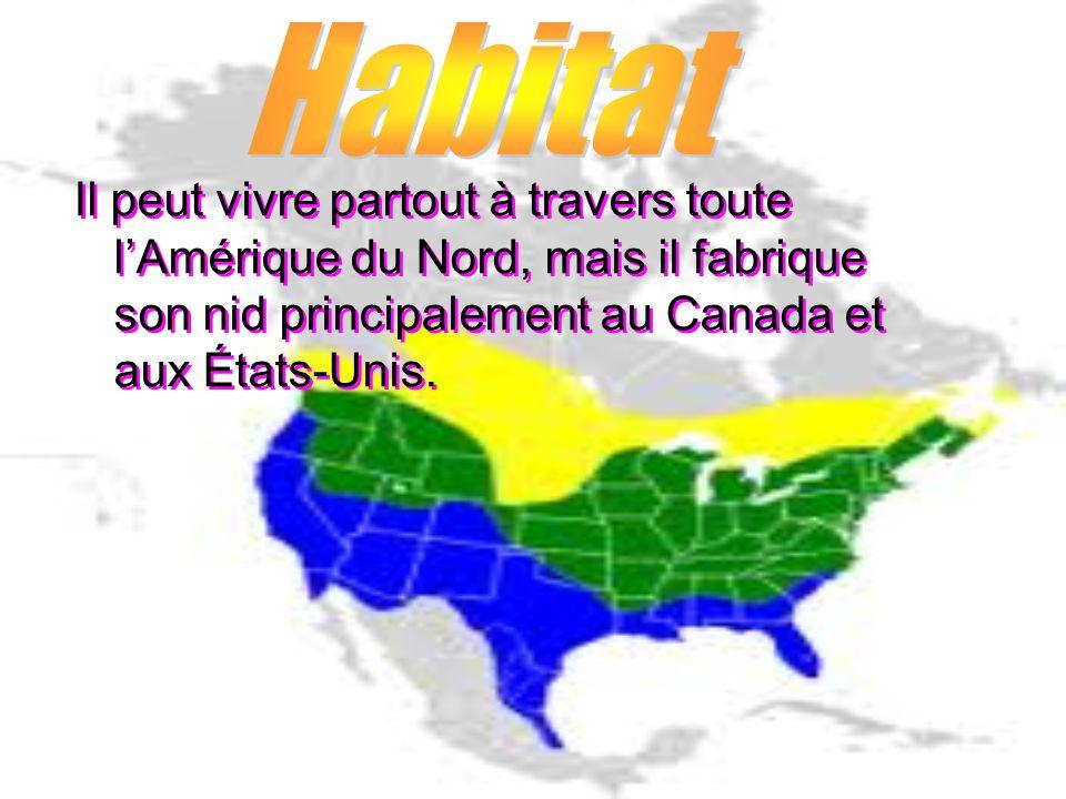 Il peut vivre partout à travers toute lAmérique du Nord, mais il fabrique son nid principalement au Canada et aux États-Unis.