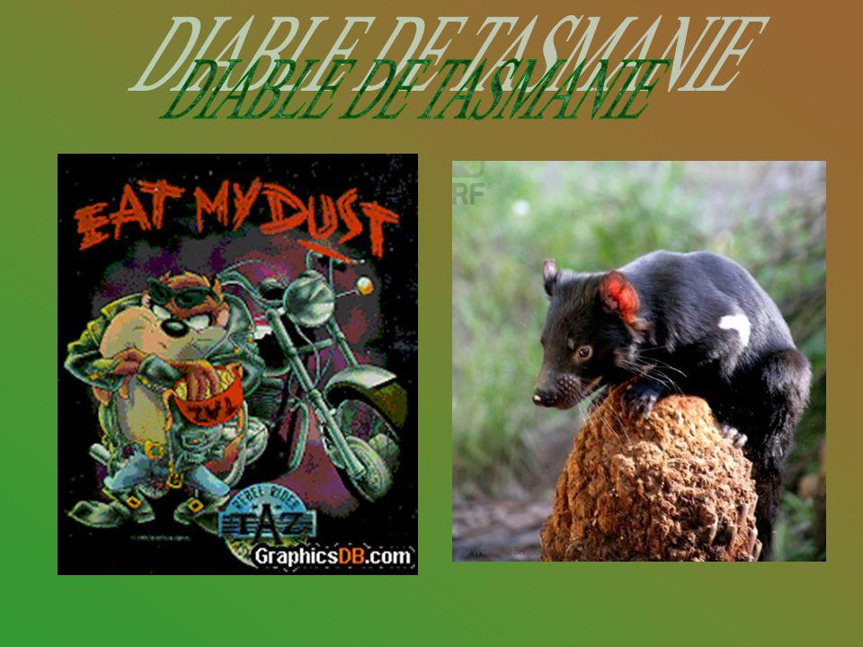 Nom LatinSarcophilus Harrisii Mode de vie Le diable de Tasmanie a une longévité de vie de 8 ans.