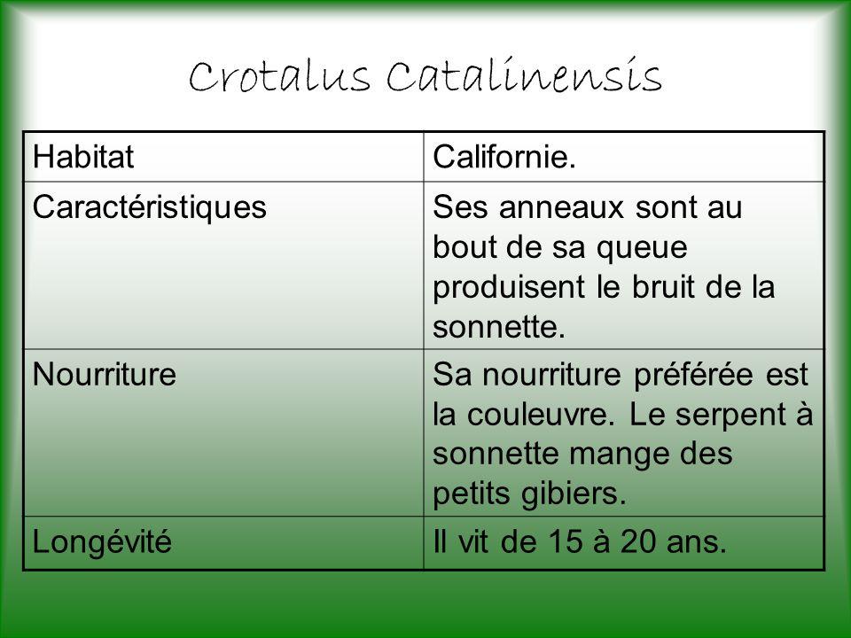 Crotalus Catalinensis HabitatCalifornie.