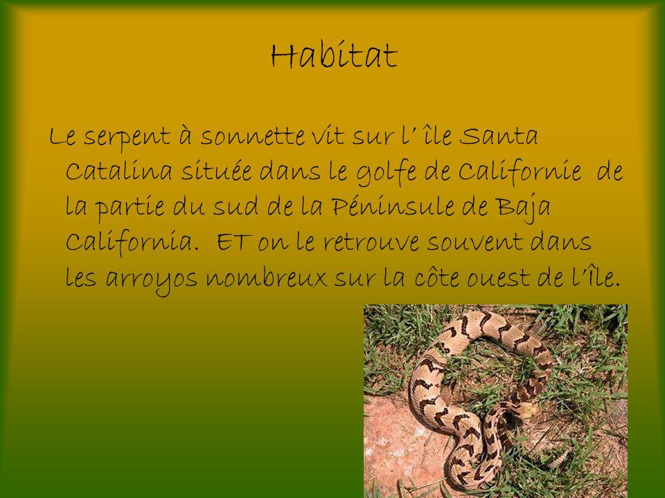 Habitat Le serpent à sonnette vit sur l île Santa Catalina située dans le golfe de Californie de la partie du sud de la Péninsule de Baja California.