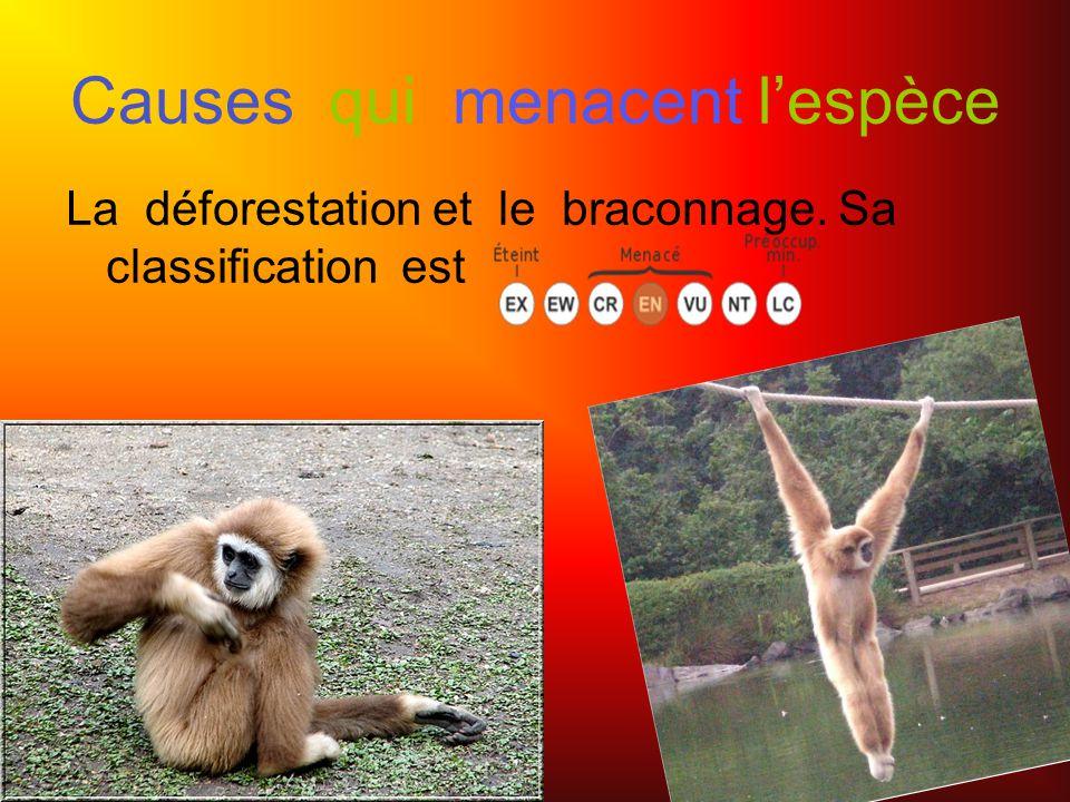 Causes qui menacent lespèce La déforestation et le braconnage. Sa classification est