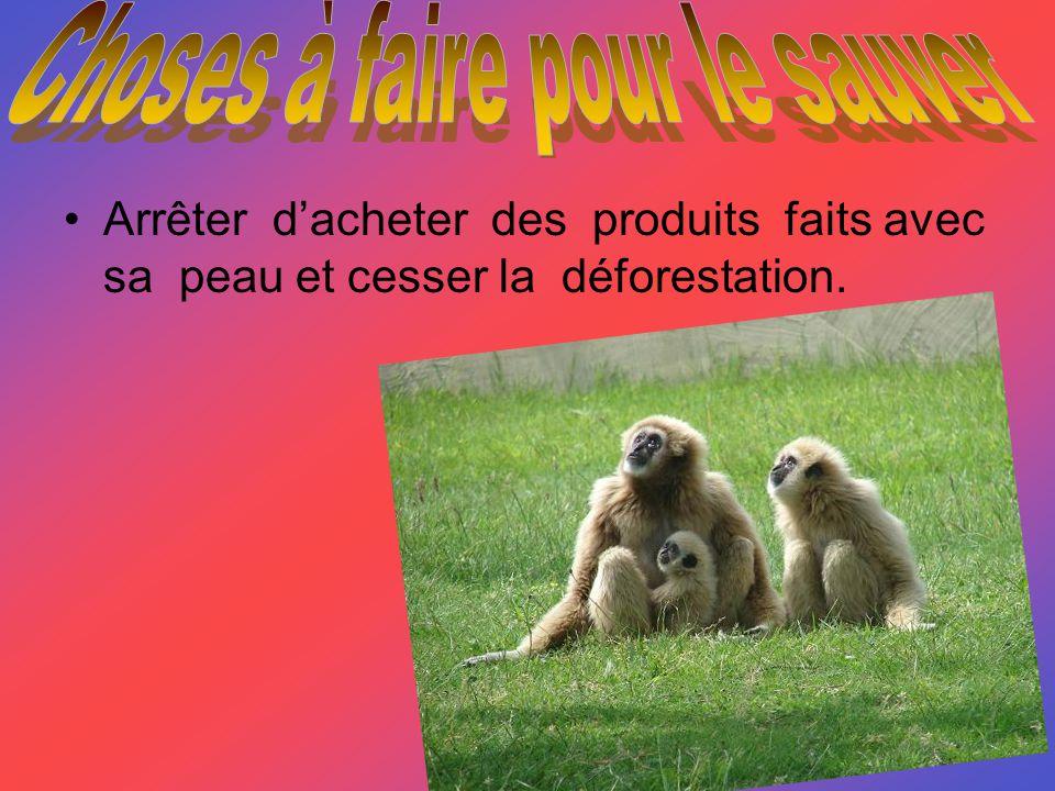 Arrêter dacheter des produits faits avec sa peau et cesser la déforestation.