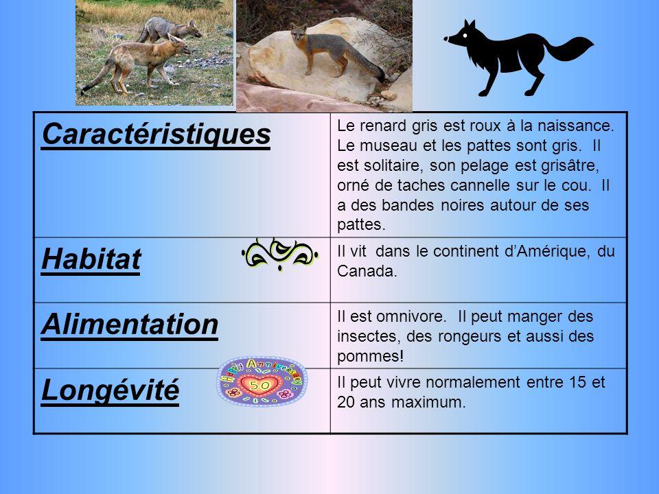 Caractéristiques Le renard gris est roux à la naissance.
