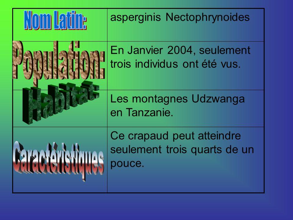 asperginis Nectophrynoides En Janvier 2004, seulement trois individus ont été vus.