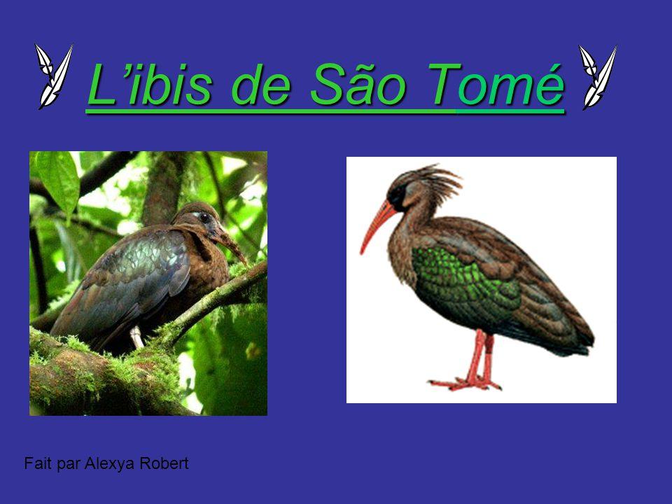 Libis de São Tomé Fait par Alexya Robert