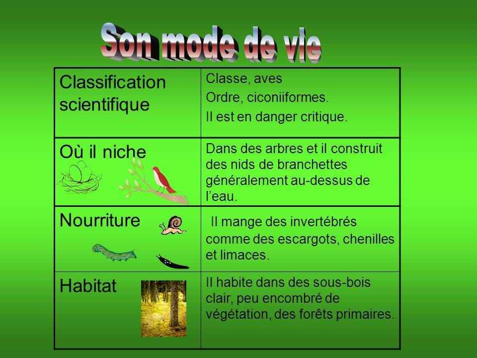 Classification scientifique Classe, aves Ordre, ciconiiformes.