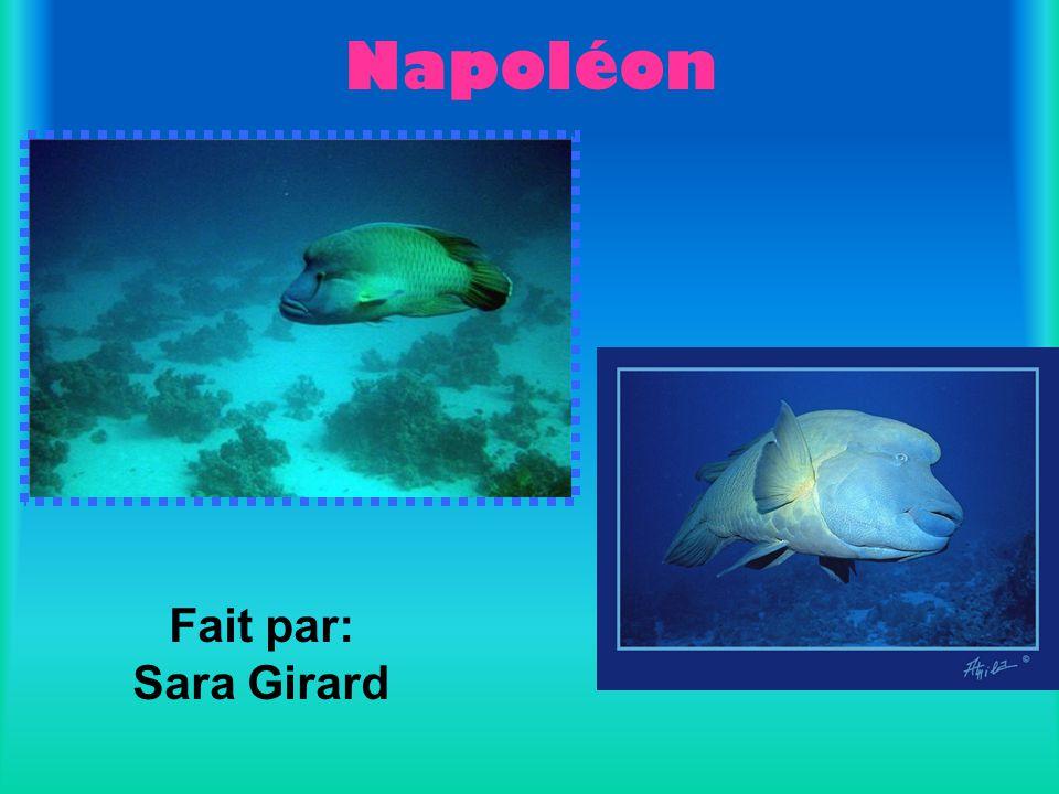 Fait par: Sara Girard Napoléon