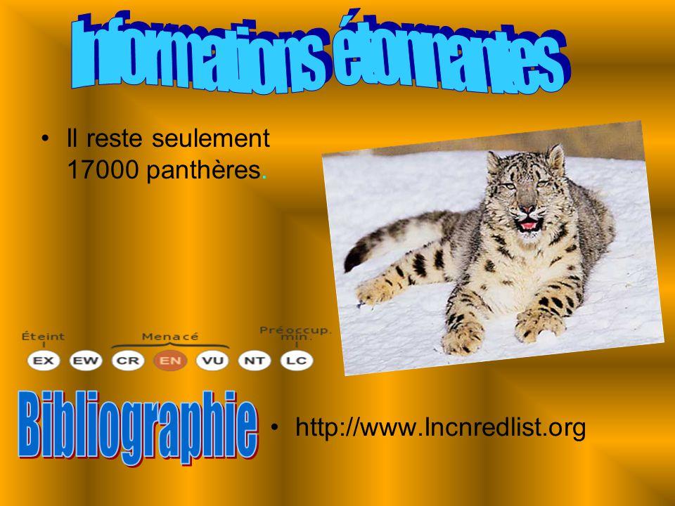 Il reste seulement 17000 panthères. http://www.Incnredlist.org