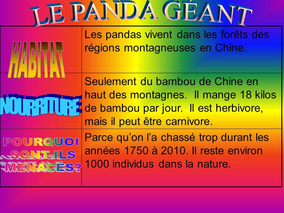 Les pandas vivent dans les forêts des régions montagneuses en Chine.