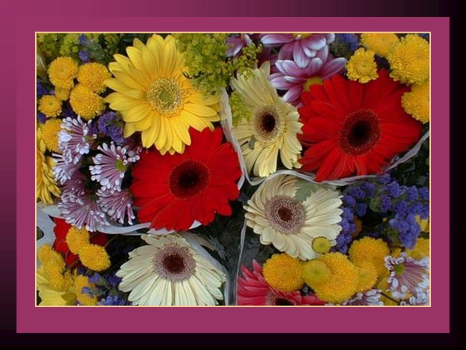 Faîtes découvrir les fleurs de votre cœur à ceux que vous aimez Je suis sûre quils en feront un bouquet magnifique, Quils les aimeront autant que moi Et quils se feront un plaisir de partager Ce bouquet qui se trouve à lintérieur de votre cœur.