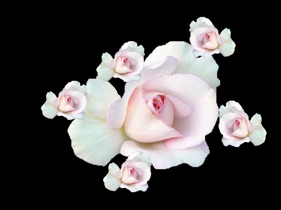 Les fleurs de la vie.. Vous voulez les cueillir avec moi ? Je vous emmène dans mon jardin fleuri.. Vous savez à quoi il ressemble ? À un endroit si do