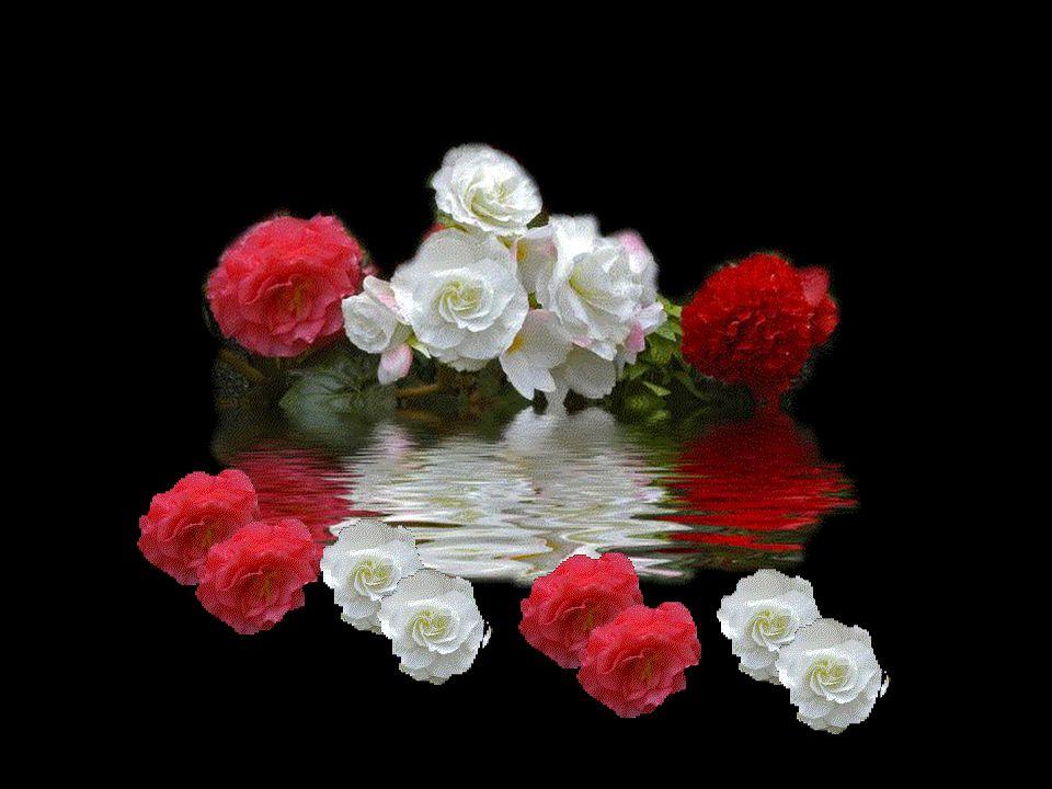 Les fleurs de la vie que j'effeuille avec vous en vous confiant ces petits mots venus de mon cœur.. Gardez-les.. je vous les offre par cet écrit.. Les
