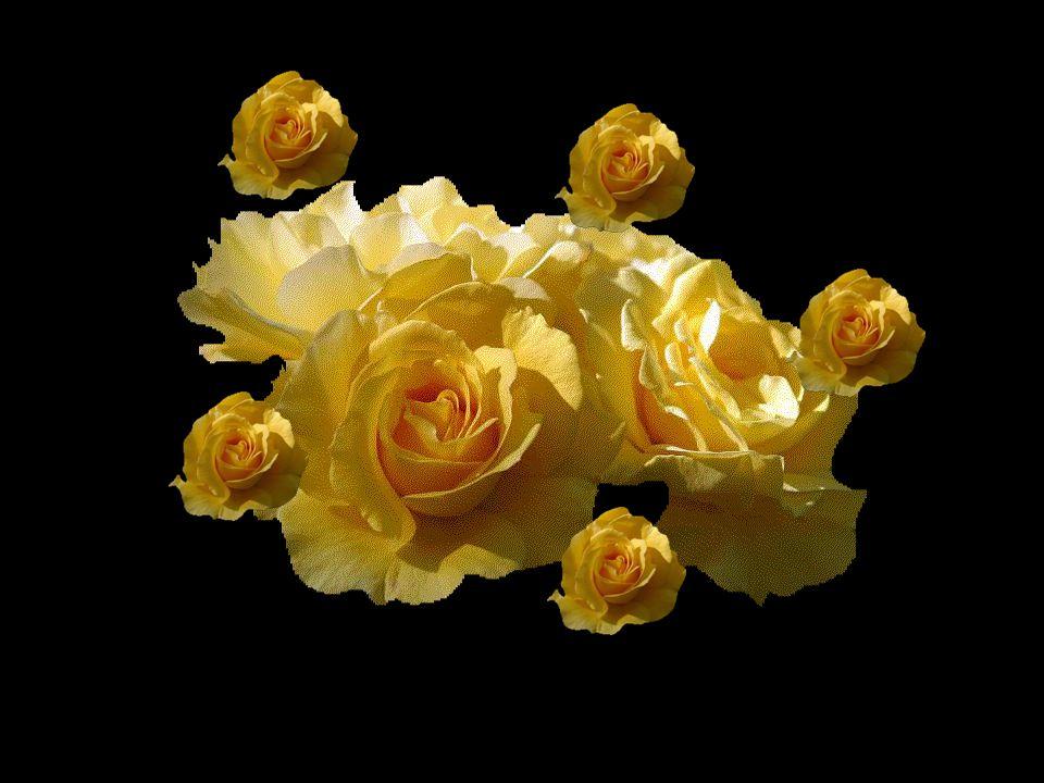Les fleurs de la vie celles que nous récoltons chaque jour par le fruit de nos efforts... Nous les rassemblons en un merveilleux bouquet champêtre.. I