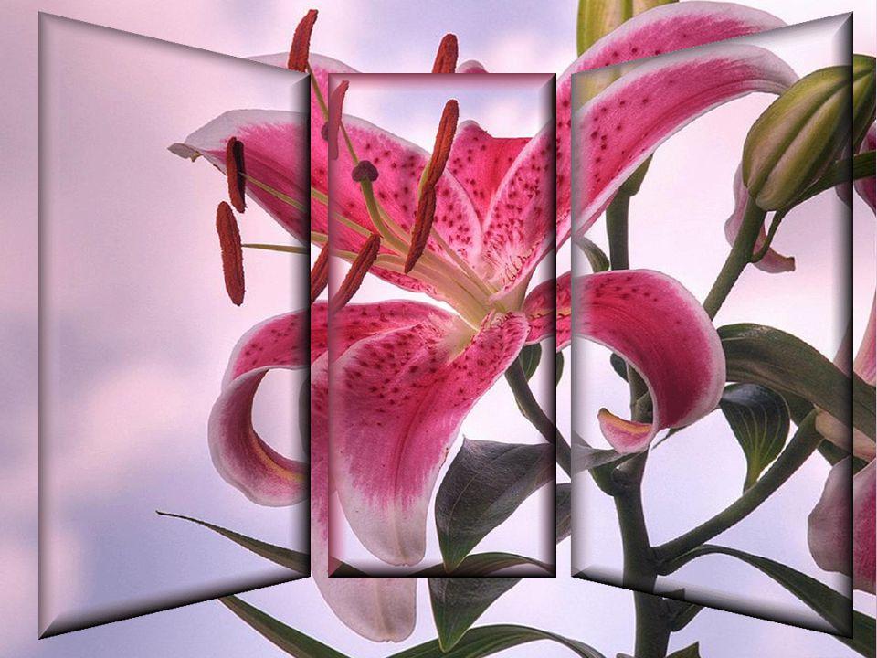 Vous sentez en vous un souffle nouveau… Celui que vous attendiez… Après une pause bien méritée vous redéfinissez votre vie… Vous restez la personne qu