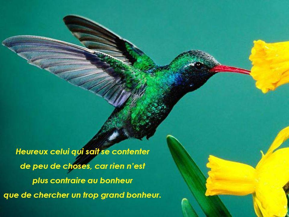 Création Le Ber YVETTE Juillet 2010 rene202@sympatico.ca Auteur : Charles-Eugène Plourde Musique : Dream