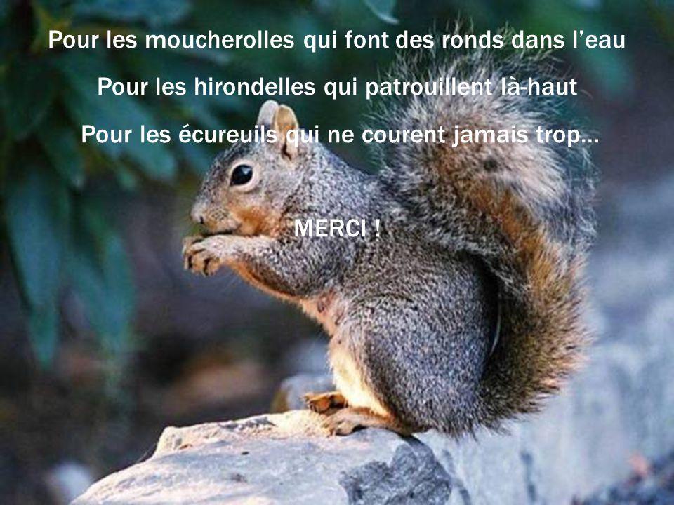 Pour les moucherolles qui font des ronds dans leau Pour les hirondelles qui patrouillent là-haut Pour les écureuils qui ne courent jamais trop… MERCI !