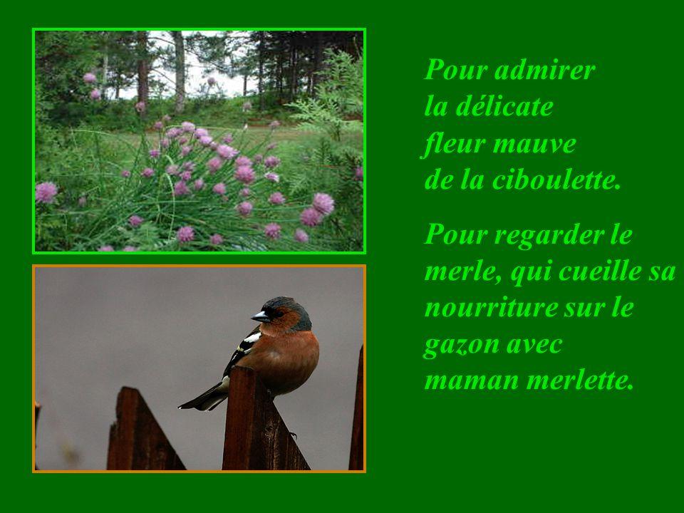 Pour observer la perle de rosée, qui se balance sans tomber, sur la feuille de la capucine.
