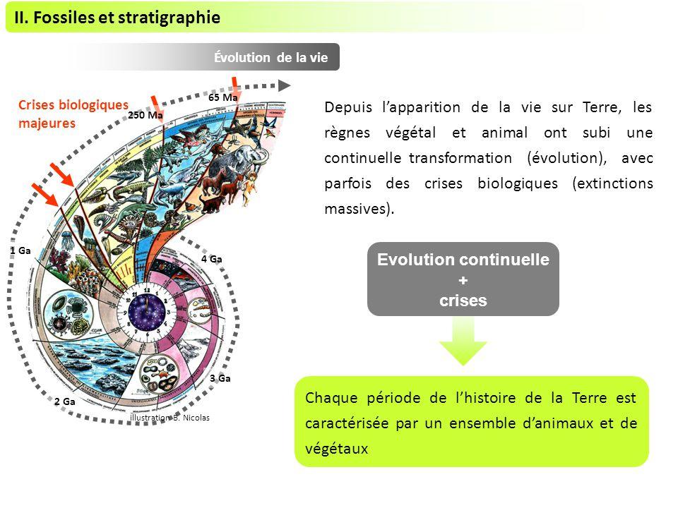 Évolution de la vie II.Fossiles et stratigraphie 4 Ga 3 Ga 2 Ga 1 Ga 250 Ma 65 Ma illustration B.