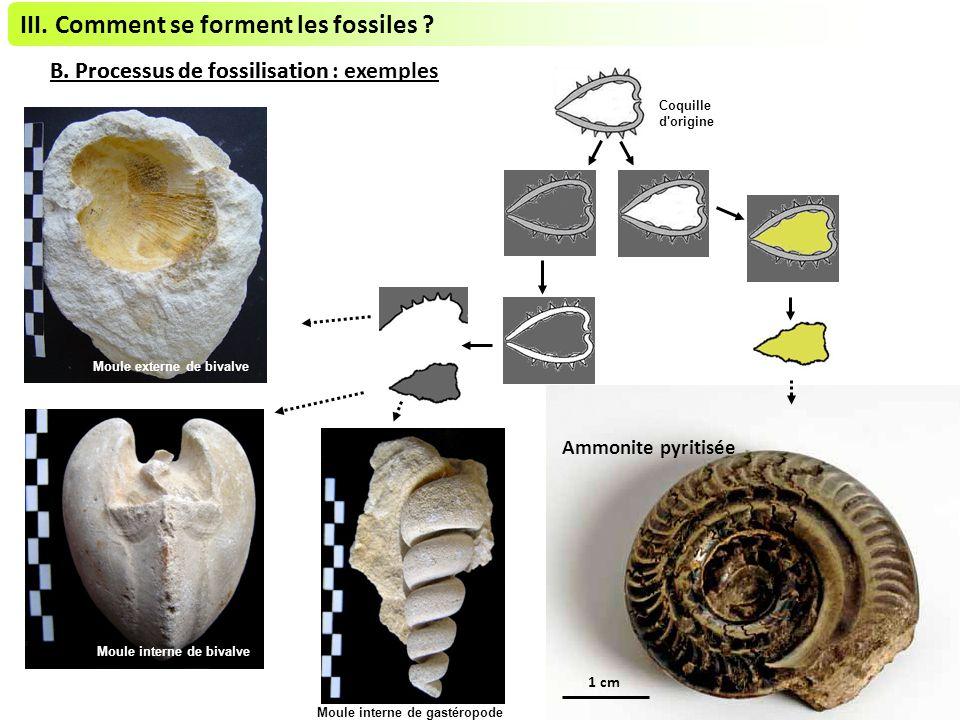 III.Comment se forment les fossiles . B. Processus de fossilisationB.