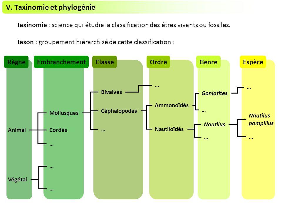 V. Taxinomie et phylogénie Taxinomie : science qui étudie la classification des êtres vivants ou fossiles. Taxon : groupement hiérarchisé de cette cla