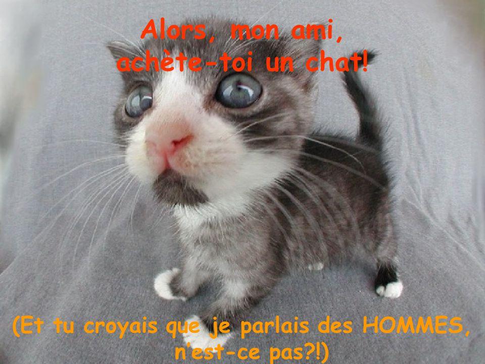 Alors, mon ami, achète-toi un chat! (Et tu croyais que je parlais des HOMMES, nest-ce pas?!)