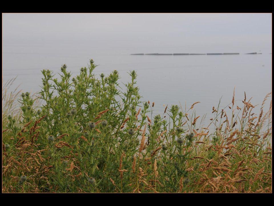 La plage de Courseulles faisait partie des secteurs Mike de Juno Beach et Courseulles fut le premier port libéré