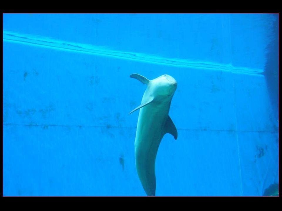 Balade dans le monde de silence de nos amis les poissons