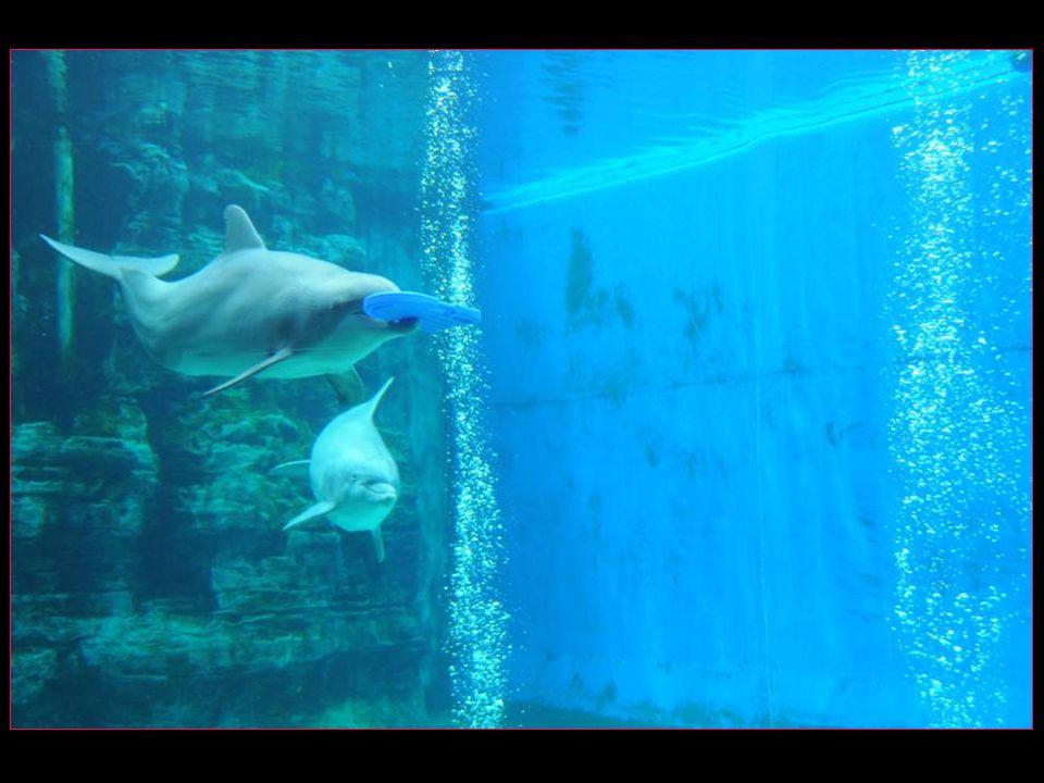 Les dauphins samusent !!!