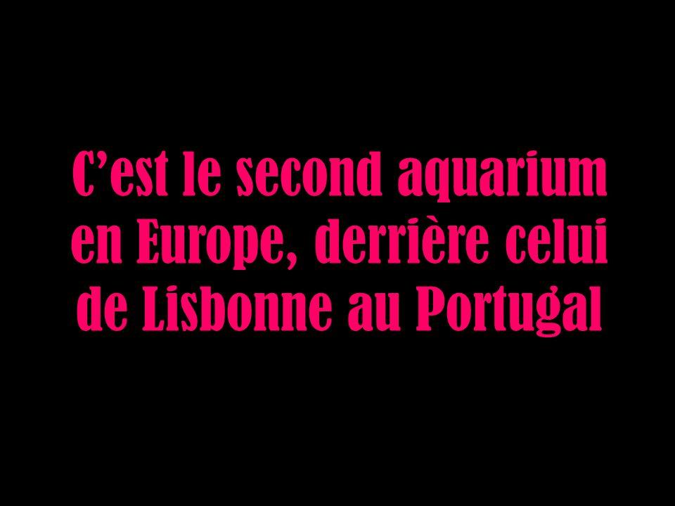 Cest le second aquarium en Europe, derrière celui de Lisbonne au Portugal