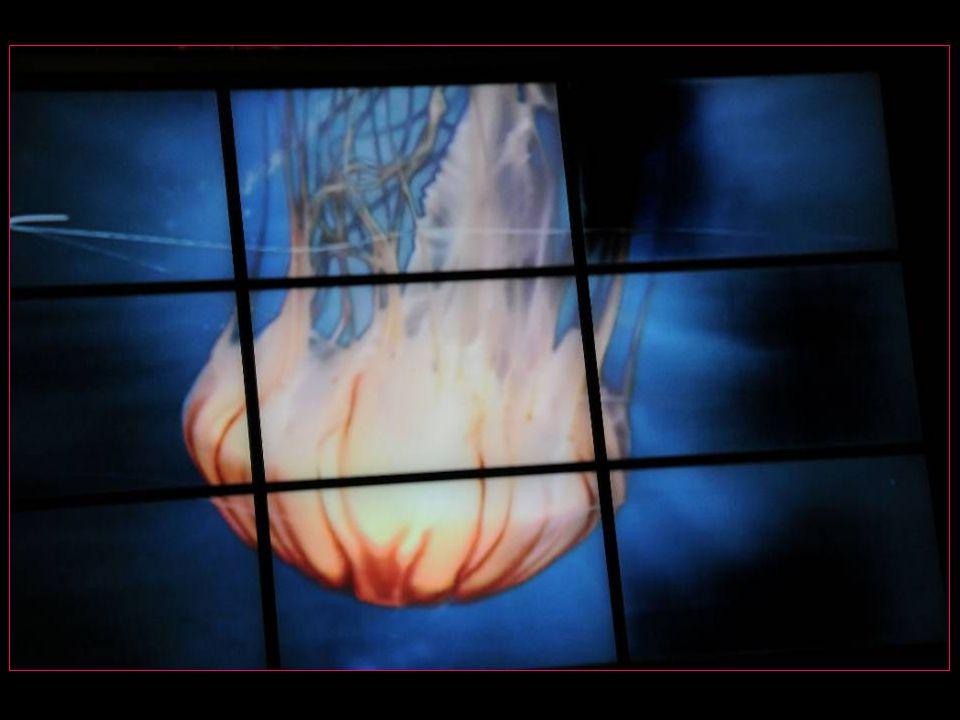 Photos : Claude PAHUD Texte : Claude PAHUD Animations : Clopa Musique : Second Rendez-vous partie 2 et partie 3 de et par Jean-Michel JARRE Réalisation Claude PAHUD dit Clopa