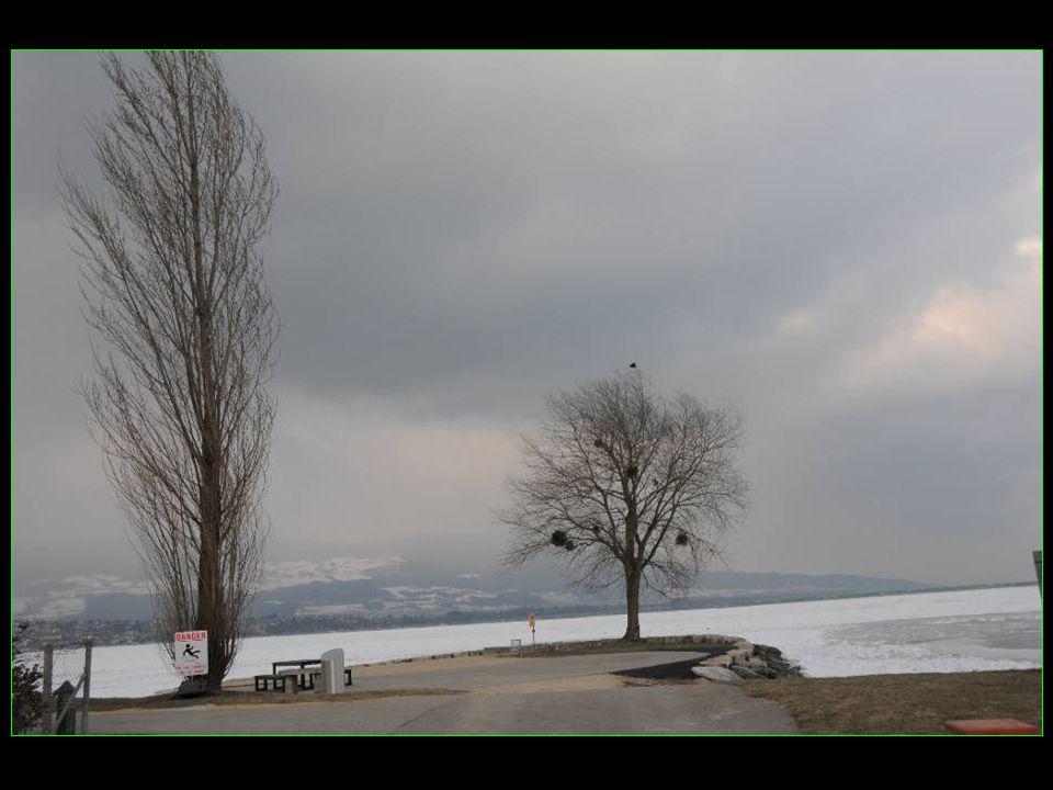 Blason de la Commune dYverdon-les-Bains