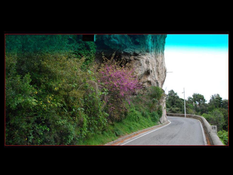 végétations et fleurs en Côte Amalfitaine