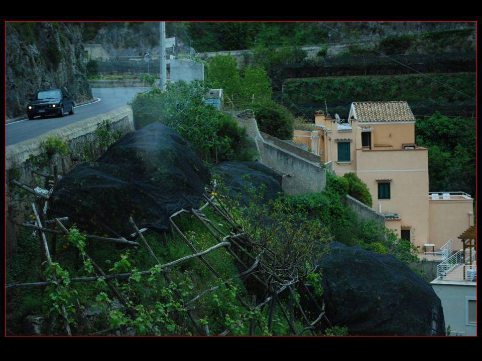 Les meilleurs citrons dItalie en côte Amalfitaine