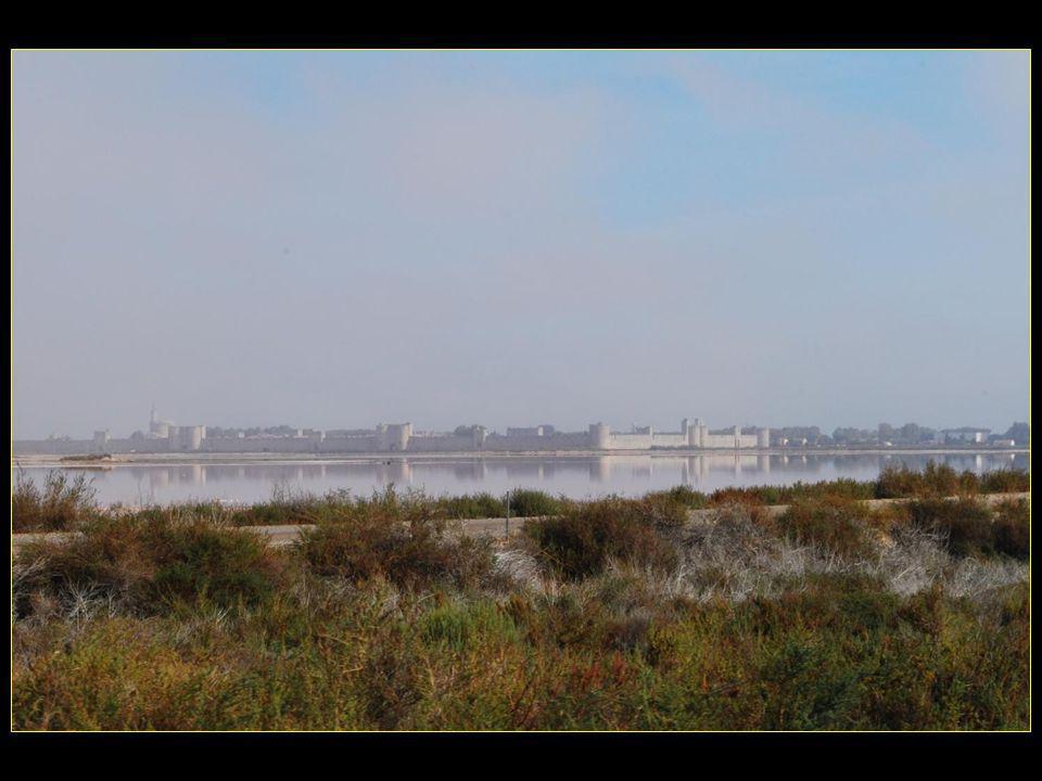 Le nom dAigues–Mortes provient des marais et des étangs qui sétendaient autour du village