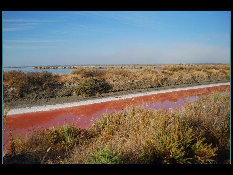 Le Salin sétend sur une longueur de 18 km et une largeur de 13,5 km