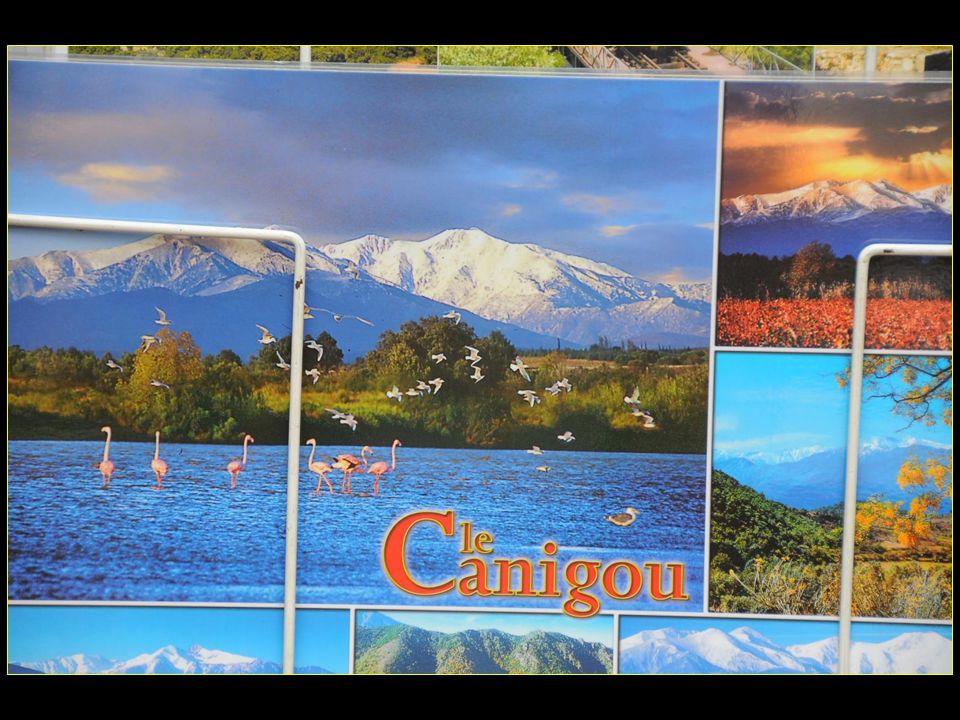 Le Canigou montagne mythique des Pyrénées, mais que nous navons vu quen cartes postales ce jour là
