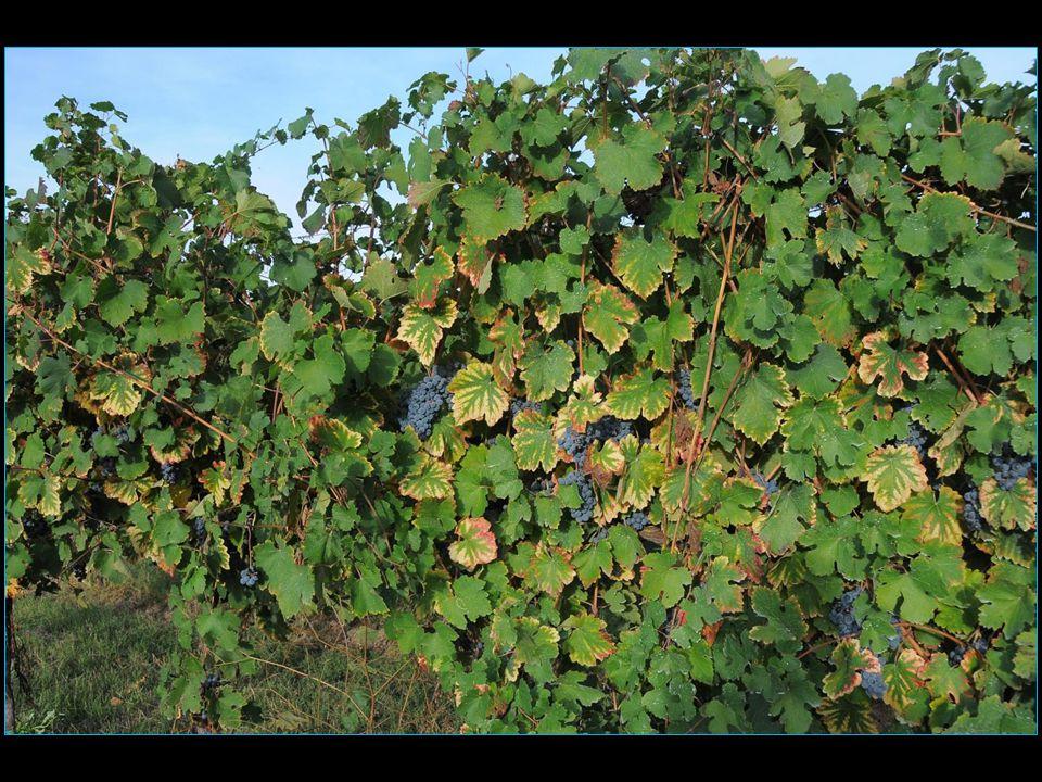 La cave Poggio Pollino les vins de lEmilie-Romagne