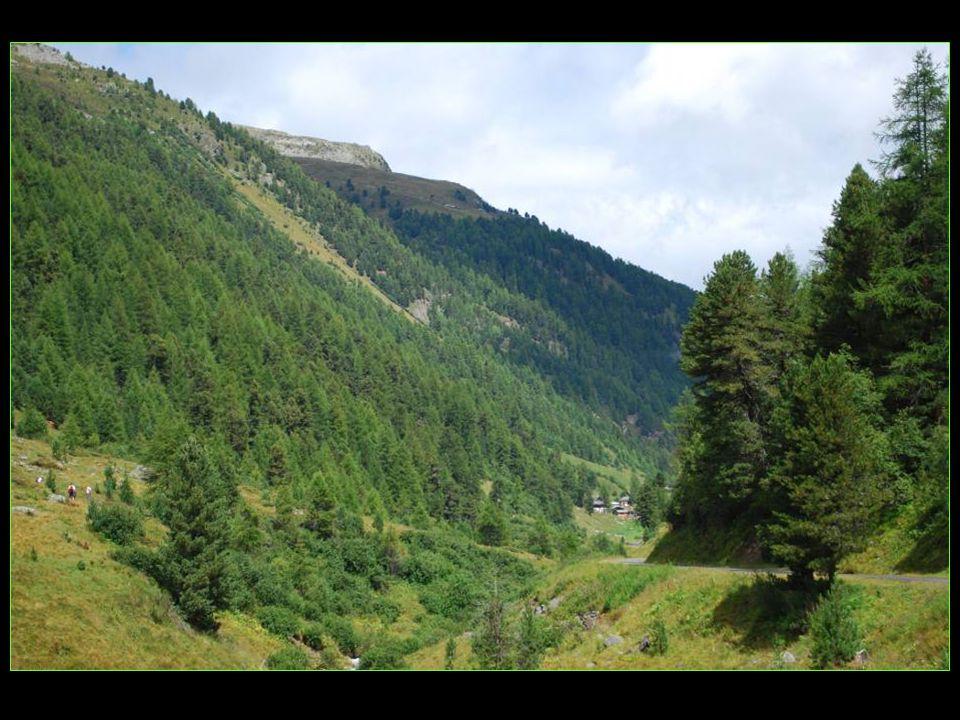 Le plus grand Stafel, anciennes maisons destivage du bétail maintenant converties en maisons de vacances, est le Gruben sétendant sur 10 km le long de la vallée de Turtmanntal, à 1822 mètres daltitude