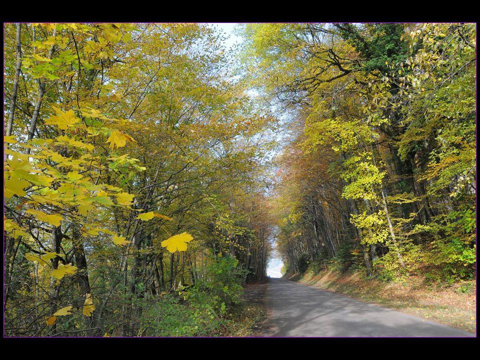 Ronde de feuilles mortes à Antagnes le 18 novembre 2013