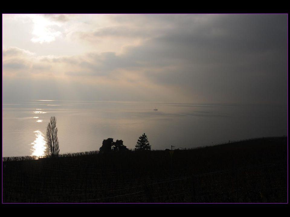 Dans le Lavaux en-dessous de Chexbres arrière automne et grains restés en vignes le 05 décembre 2013
