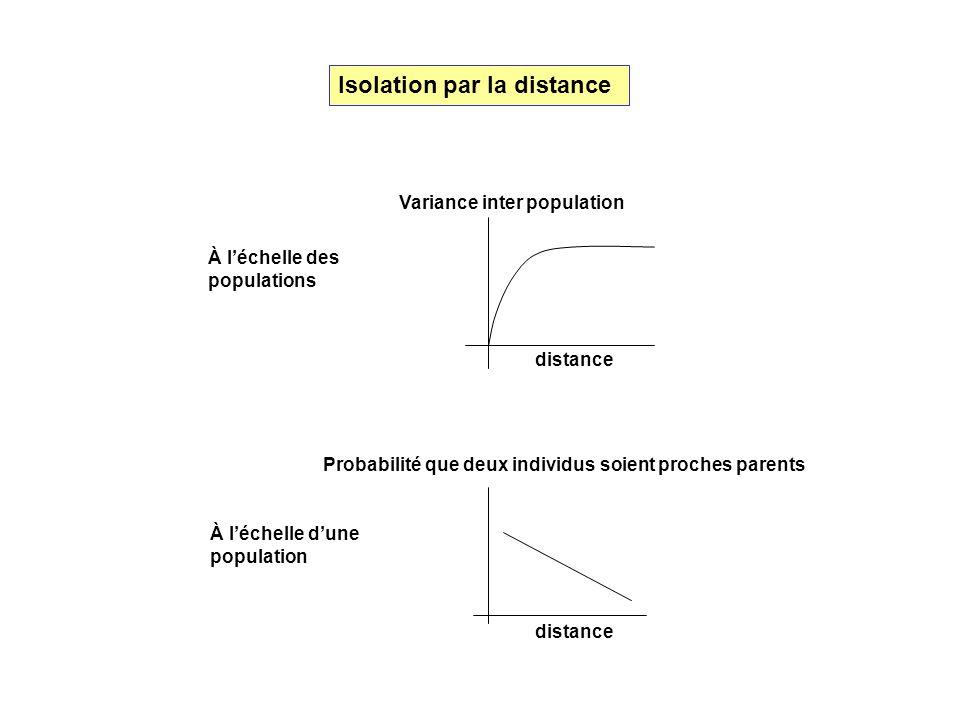 distance Variance inter population Probabilité que deux individus soient proches parents À léchelle des populations À léchelle dune population Isolati